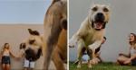 Casal faz ensaio fotográfico para noivado e quem se destaca é seu cão Thor - veja fotos