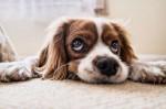 O que significa sonhar com cachorro?