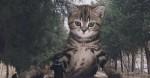 Artista imagina o mundo com gatos gigantes, e o resultado é hilário