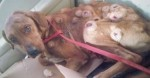 Recuperação fantástica de cachorro abandonado é lição para jamais desistirmos de lutar