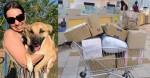 Cão Chico usou carrinho para buscar presentes de empresas nos Correios