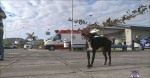Comerciante que agrediu cãozinho com barra de ferro é preso em Piumhi (MG)