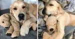 Cachorro ganha versão pelúcia dele mesmo enquanto se recupera de cirurgia