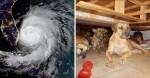 Mulher abriga 97 cães em casa para protegê-los do Furacão Dorian nas Bahamas
