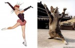 Artista coloca gatinhos posando como modelos em sessão de fotos hilária