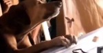 Cão super entristecido não sai de perto de caixão de dono falecido (veja o vídeo)