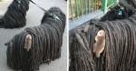 Mulher encontra filhote de gambá agarrado em seu cachorro 'aproveitando' uma carona