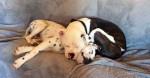 Conheça Kingston & Lola: O casal de cães mais fofos da internet