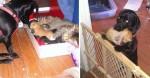 Cãozinho adota filhotes de gatinha de rua que estavam passando fome