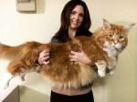 Maior gato do mundo aguarda pelo recorde mundial