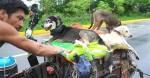 Viajante que percorre cidades acolhendo cães em situação de rua já salvou quase 500 cachorros