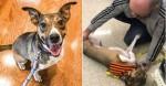 Homem se emociona ao reencontrar sua cachorra perdida há anos em evento de adoção