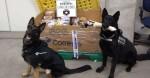 Cães farejadores encontram R$ 1 milhão em drogas em Indaiatuba (SP)