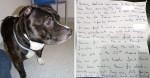 Cão é abandonado dentro de igreja com bilhete de desculpas comovente na coleira