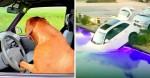 Cachorro esquecido dentro de carro 'dirige' o veículo e o joga dentro de piscina (veja o vídeo)