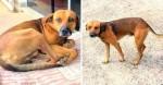 Por 120 dias, cachorro esperou na porta de hospital retorno de dono sem-teto falecido em SP