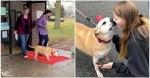 Cachorrinha de 12 anos aguarda 2461 dias até finalmente ser adotada: 'Nunca perdeu a esperança' (veja o vídeo)