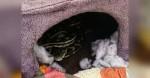 Família fica aterrorizada ao encontrar cobra píton escondida na casa do seu gato