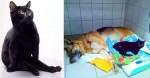 Gatinho com deficiência faz companhia para cães internados em clínica: 'Amigo de todas as horas'