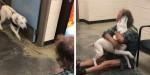 Homem sem-teto perde seu amado e fiel cão e ONG animal o reencontra (veja o vídeo)