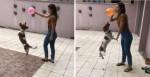 Cachorro catarinense craque em embaixadas com balão viraliza nas redes sociais (veja o vídeo)