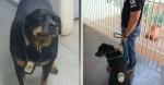 Cãozinho rottweiler policial, terror dos meliantes, falece e deixa saudade em delegacia do MS