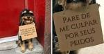Usando plaquinhas, cachorro 'protesta' contra coisas irritantes do cotidiano; veja fotos