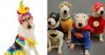 Pets fantasiados inspiram looks para o Carnaval e resultado é muito fofo