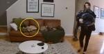 Em vídeo viral, cachorro ajuda dono a carregar roupa suja para lavar (veja o video)