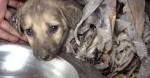 Quatro cachorros cobertos e imobilizados por substâncias químicas são salvos e tratados por ONG