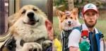 Dono carrega cão corgi na mochila para não ser pisoteado e encanta todos em metrô (veja o vídeo)