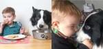 Viralizou: Menino de 2 anos ama tanto seu cão border collie que acha que eles são irmãos (veja o vídeo)