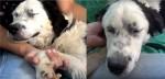 Cadela que nunca recebeu carinho adormece no colo de socorrista após ser resgatada das ruas