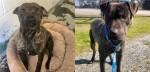 Cão assustado em abrigo não consegue acreditar que ele acabou de ganhar sua 1ª caminha