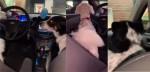 Irritado com irmão canino 'chorão', cão late fazendo com que ele fique quieto em vídeo impagável