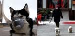 Coronavírus: Sérvia proíbe passeios com pets e causa revolta dos donos nas redes sociais