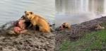 Fiéis, cães não abandonam idosa caída coberta de lama na beira de um rio no Nepal