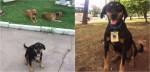 Cães são acolhidos e ganham crachás de funcionários em posto de gasolina no Rio Grande do Sul