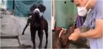 Defensor da causa animal, delegado Bruno Lima salva 14 cães que foram encontrados amordaçados (veja o vídeo)