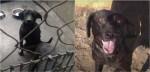 """Cadela abandonada pelo dono por ser """"muito feia"""" é adotada por família que a transformou em um animal feliz"""