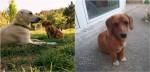 Cachorra sai para passear, encontra filhote abandonado e o adota