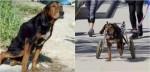 Cão vira-lata atropelado se arrasta por dias até ser socorrido e receber ajuda; assista