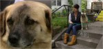 Cadela foge de novo lar e caminha 97 dias para encontrar casa de voluntária que a acolheu anteriormente