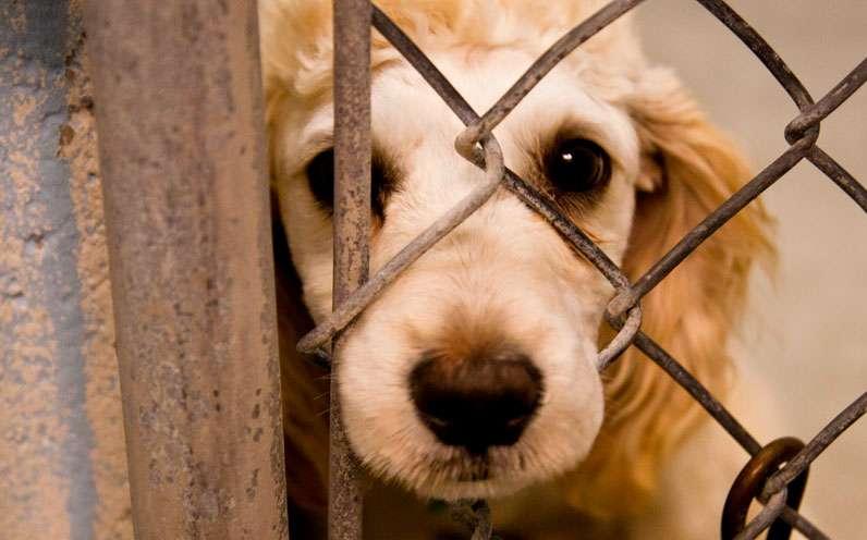 Resultado de imagem para Deixar cachorro acorrentado ou sempre preso torna-se crime em Florianópolis