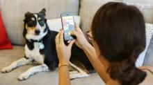5 dicas para tirar fotos profissionais do seu pet