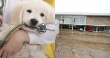 Hospital veterinário público será entregue à prefeitura de Porto Alegre