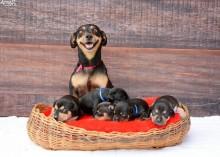 Cachorrinha e seu ensaio de maternidade surpreendente (VEJA AS FOTOS)