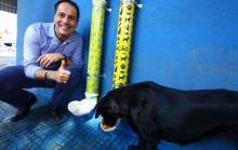 Prefeitura instala comedouro e bebedouro para animais de rua em Mauá (SP)