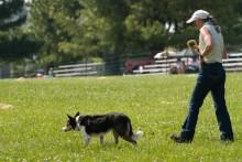 Lazer para cães: atividade séria que você e eles precisam