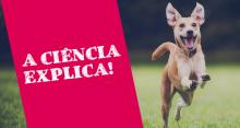 Ciência explica o motivo de cães ficarem tão felizes quando seu dono chega em casa